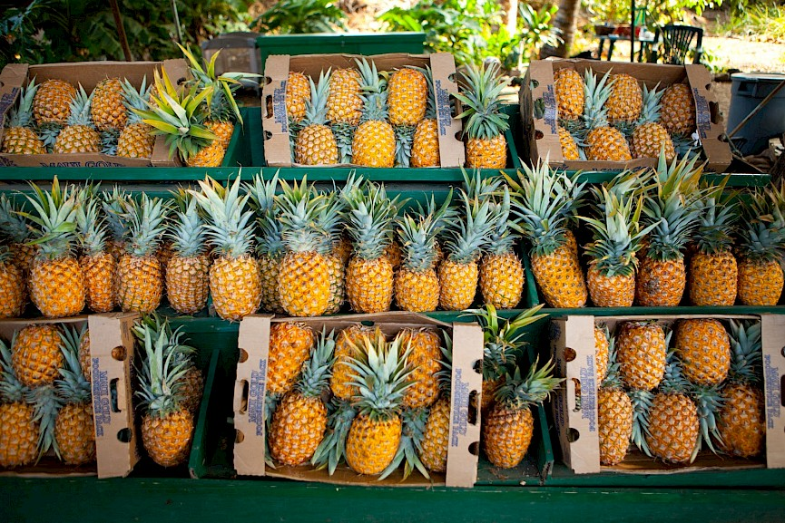 Visiting the Dole Pineapple Plantation